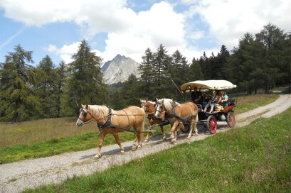 Carriage rides with Haflinger Horses