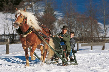 Horse-Drawn Sleigh Rides & Winter Riding: Val Sarentino/Sarntal