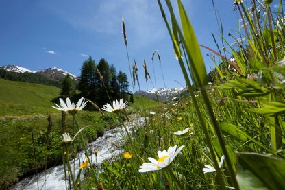 The Rojental valley in summertime